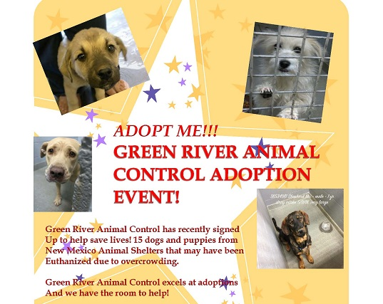 Animal Adoption Event Flyer